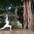 Yoga near banyan tree — Stock Photo #30454215