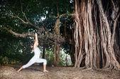 Yoga near banyan tree — Stock Photo