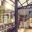Ruined greenhouse — Stock Photo