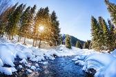 冬の山の川 — ストック写真