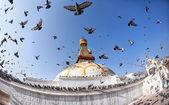 Bodnath stupa com pássaros voando — Fotografia Stock
