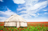 Urta nomadic house at poppy flowers field — Stock Photo