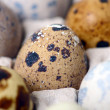 Quail eggs — Stock Photo #25012383