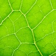 Green leaf background — Stok fotoğraf