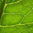 Stock Photo: Green leave texture