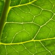 Green leave texture — Stock Photo #32787749