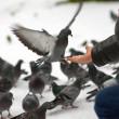 Pigeons — Stock Photo #37032807