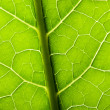 Green leave texture — Stock Photo #40066117