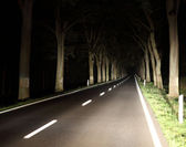 Asphalt road at night along the trees — Stock Photo