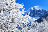 Snowy branches on the background of the Alps — Stockfoto