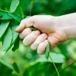 Hand plucks the plant. Concept of environmental destruction — Stock Photo