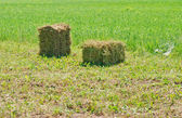 A farm field in the countryside filled with hay bales — Stock Photo