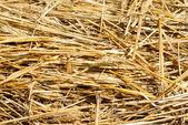 Nära håll hö halm stack textur, jordbruk bakgrund — Stockfoto