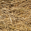 Close up hay straw stack texture, agriculture background — Stock Photo