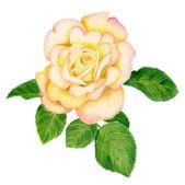 Hand-drawn golden rose — Stock Photo