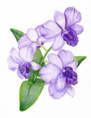 Hand-drawn lilac orchid branch — Stock Photo