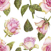 Hand-drawn pattern with pink roses on white — Stock Photo
