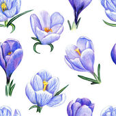 Hand-drawn pattern with crocuses on white — Stock Photo