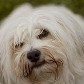Gentle dog look — Stock Photo