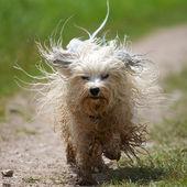 Struwwelpeter — Foto de Stock