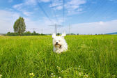 Dog under tension — Stock Photo