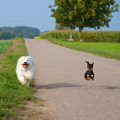 Dog racing light — Stock Photo