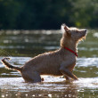 Wagging its tail in the water — Stock Photo