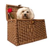 Hund im Korb — Stockfoto