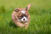 Happy Dog baby — Stock Photo