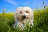 Braver Hund — Stock Photo