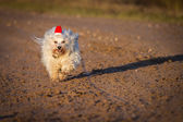 Dog with red stocking cap — Stock Photo