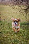 Gambling mixed breed puppy — Stock Photo