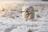Dog with stick — Stockfoto