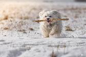Hond met stok — Stockfoto