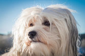 Dog Portrait — Stock Photo
