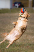 Catch ball — Stockfoto