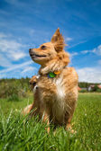 Brand dog — Stock Photo
