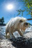 Saltar fuera del agua — Foto de Stock
