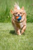 Captured ball — Stock Photo