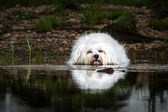 Dog lying in the water — Stock Photo