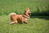 Attentive dog — Stock Photo
