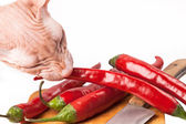 Crazy cat sphinx eating hot chili pepper from board — Stock Photo