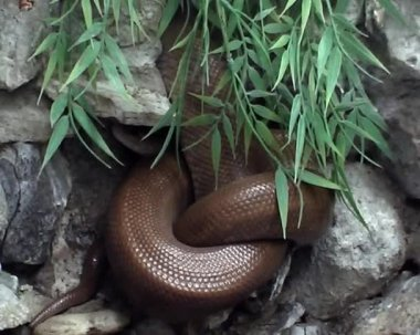 Two dangerous snakes in city zoo — Stock Video