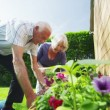 Happy retired couple gardening on a summer day — Stock Video