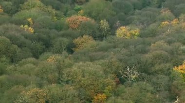 Flying over English woodlands — Stock Video