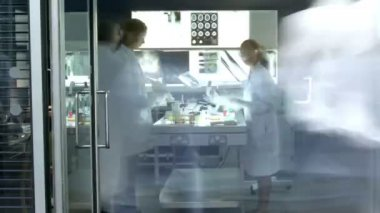 Team of researchers working in laboratory — Stock Video