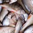 Stock Photo: Lots of fresh perch and roac