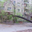 Tree Uprooted After Storm — Stock Photo #23126538