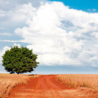 Lonely tree on the field under blue sky and different clouds — Stock Photo