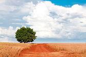 Einsamer baum auf dem feld unter blauen himmel und verschiedenen wolken — Stockfoto